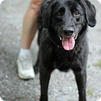 Adopt A Pet :: Arwen - Tinton Falls, NJ