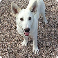 Adopt A Pet :: Sandler - Cedar City, UT