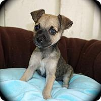 Adopt A Pet :: Weni - La Habra Heights, CA