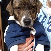 Adopt A Pet :: Jerry-Mellow, Sweet Guy!! - Kirkland, WA