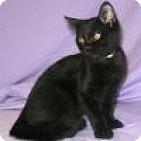 Adopt A Pet :: Kookie - Powell, OH