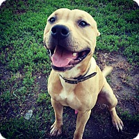 Adopt A Pet :: Kilo - Fort Riley, KS
