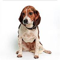 Adopt A Pet :: Missy - Dumfries, VA