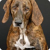 Adopt A Pet :: Knuckles - Newland, NC