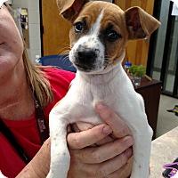 Adopt A Pet :: Posey - Charlemont, MA