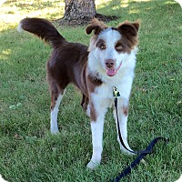 Adopt A Pet :: Cooper-Adoption Pending - Midwest (WI, IL, MN), WI