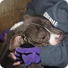 Adopt A Pet :: Sammy - Henderson, NC