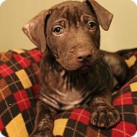Adopt A Pet :: Cadbury - Sudbury, MA