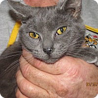 Adopt A Pet :: Slate - Germantown, MD