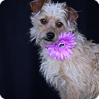 Adopt A Pet :: Gretel - SAN PEDRO, CA