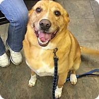 Adopt A Pet :: Millie - Hillsboro, IL