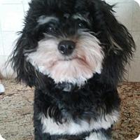 Adopt A Pet :: Stella - Ocean Ridge, FL