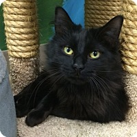 Adopt A Pet :: Little Bear - Byron Center, MI