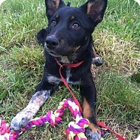 Adopt A Pet :: Lexi - Manassas, VA