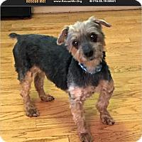 Adopt A Pet :: Paco - Davenport, IA