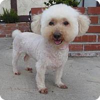 Adopt A Pet :: Peach - Los Angeles, CA
