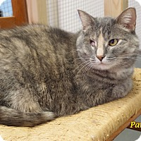 Adopt A Pet :: Patches - Chisholm, MN