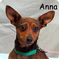 Adopt A Pet :: Anna - Warren, PA
