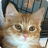Adopt A Pet :: Stinker - Winchester, CA