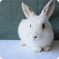 Other/Unknown Mix for adoption in Fountain Valley, California - Lotty