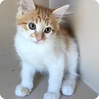 Adopt A Pet :: Hutch - Mesa, AZ