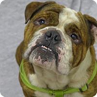 Adopt A Pet :: Gimli - Santa Ana, CA