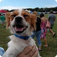 Adopt A Pet :: Pappy - Pinellas Park, FL