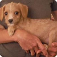 Adopt A Pet :: Shasta and friends - Flanders, NJ