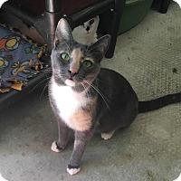Adopt A Pet :: Sasha - Menifee, CA