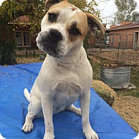 Adopt A Pet :: Emiko - Chandler, AZ