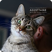 Adopt A Pet :: Mona - Edwardsville, IL