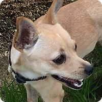 Adopt A Pet :: Bambi - Oakley, CA