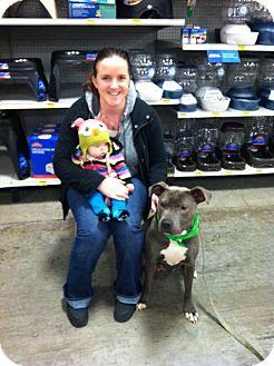American Pit Bull Terrier Mix Dog for adoption in Bellingham, Washington - Gigi