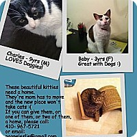 Adopt A Pet :: Baby - Randallstown, MD