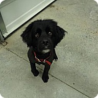 Adopt A Pet :: Kody - Chewelah, WA
