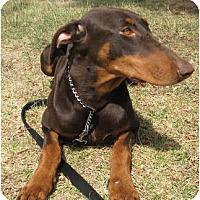 Adopt A Pet :: Greta - Sun Valley, CA