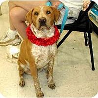 Adopt A Pet :: Piedro - Scottsdale, AZ