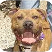 Adopt A Pet :: Romeo - Hoffman Estates, IL