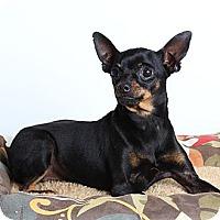 Adopt A Pet :: Oliver - Oakland, CA