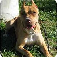 Adopt A Pet :: Stella - Lodi, CA