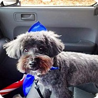 Adopt A Pet :: Murphy - Sherman, CT