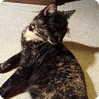 Adopt A Pet :: Delilah - Fairborn, OH