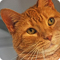 Adopt A Pet :: Lady Red - Alexandria, VA