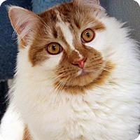 Adopt A Pet :: Donner - Paris, ME