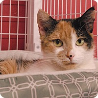 Adopt A Pet :: Feliz - Winchendon, MA