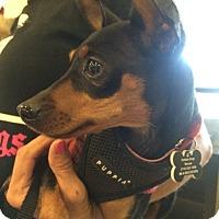 Adopt A Pet :: Xena - Santa Ana, CA