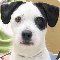 Adopt A Pet :: Doogie - Jefferson, WI