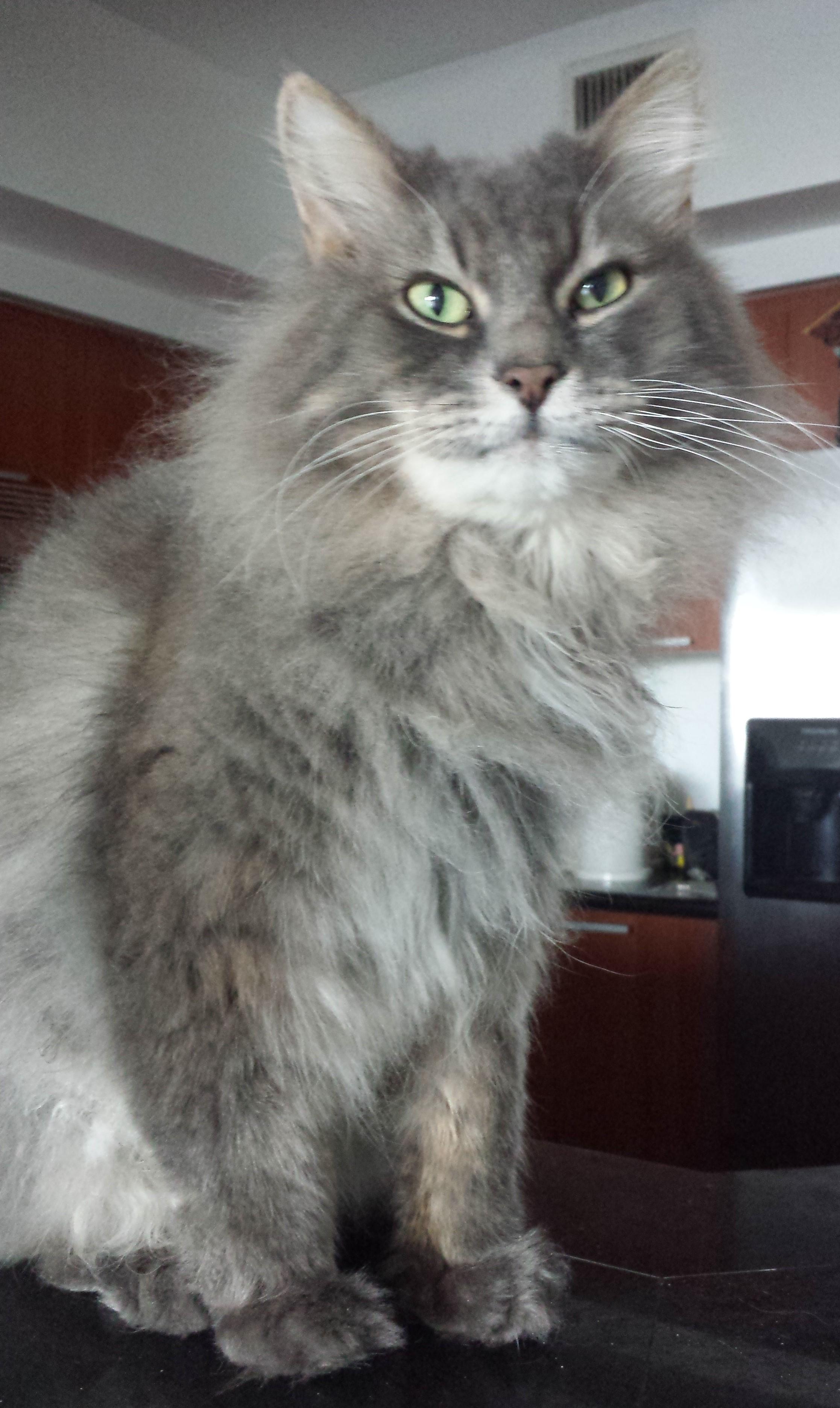 Miami Adopt A Cat