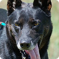 Adopt A Pet :: Thor AD 07-16-16 - Preston, CT