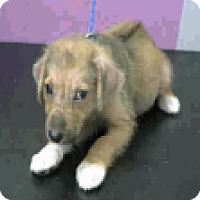 Adopt A Pet :: Mystery - Fort Collins, CO